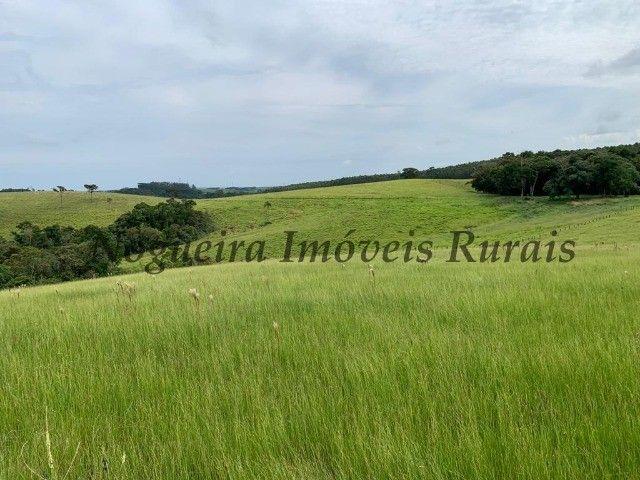 Fazenda com 59 alqueires para pecuária (Nogueira Imóveis Rurais) - Foto 7