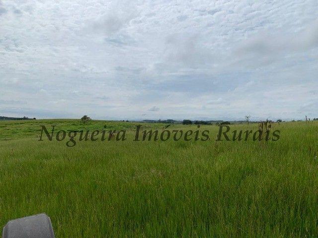 Fazenda com 59 alqueires para pecuária (Nogueira Imóveis Rurais) - Foto 14