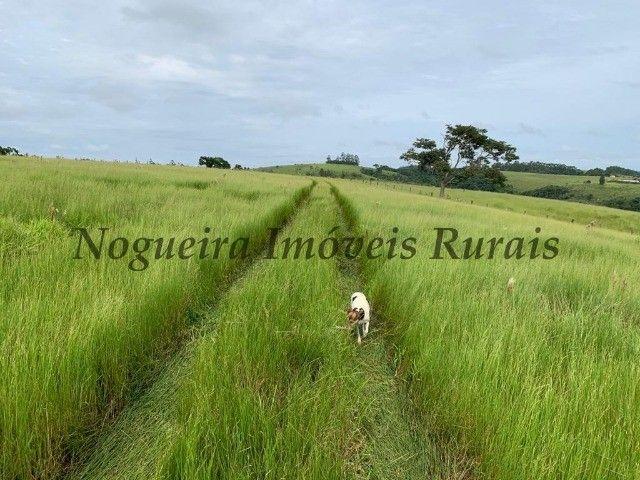 Fazenda com 59 alqueires para pecuária (Nogueira Imóveis Rurais)