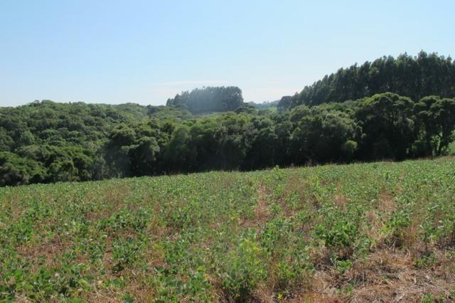 Área imperdível R$100.000,00 o alq. de planta/R$50.000,00 bosque e rio - Foto 14