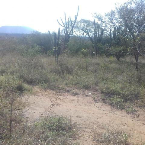 Fazenda em Itaberaba, 78 tarefas, 344 mil metros2 - Foto 13
