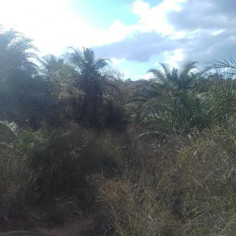 Fazenda em Itaberaba, 78 tarefas, 344 mil metros2 - Foto 12