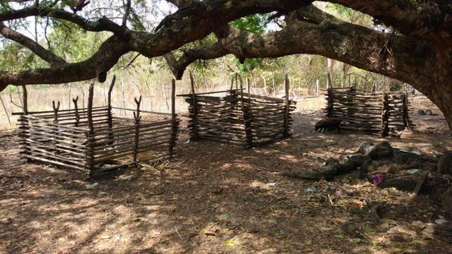 Fazenda em José de Freitas-PI - Foto 5