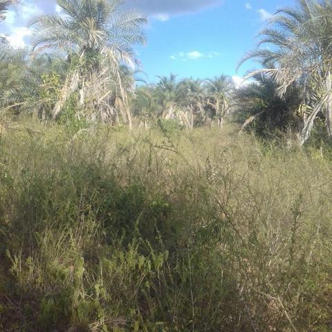 Fazenda em Itaberaba, 78 tarefas, 344 mil metros2 - Foto 2