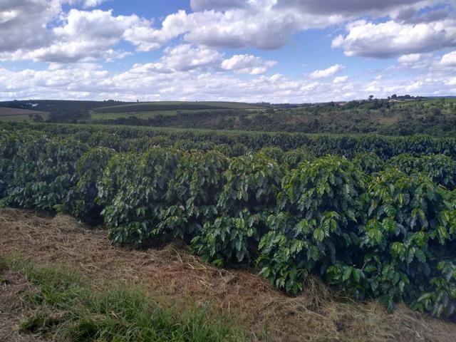 Fazenda com 83ha bem localizada, em Patrocínio!! - Foto 5