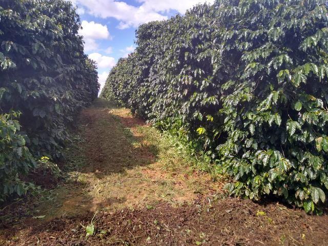 Fazenda com 83ha bem localizada, em Patrocínio!! - Foto 9