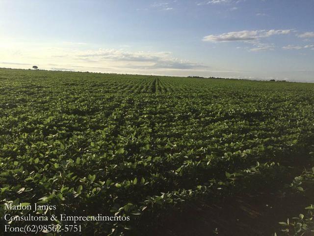 Fazenda em Mundo Novo! - Foto 4