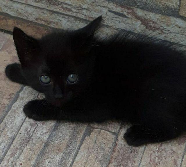 Lindo gatinho peludo para adoção