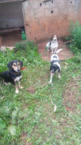 Vendo trela de cachorra de caça - Foto 2