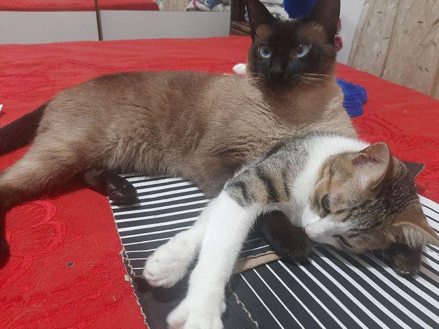 Doaçao casal de gatos - Foto 3
