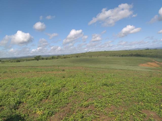Propriedade de 8 hectares-toda cercada-com 2 casas, a 5 km de Apoti-PE - Foto 13