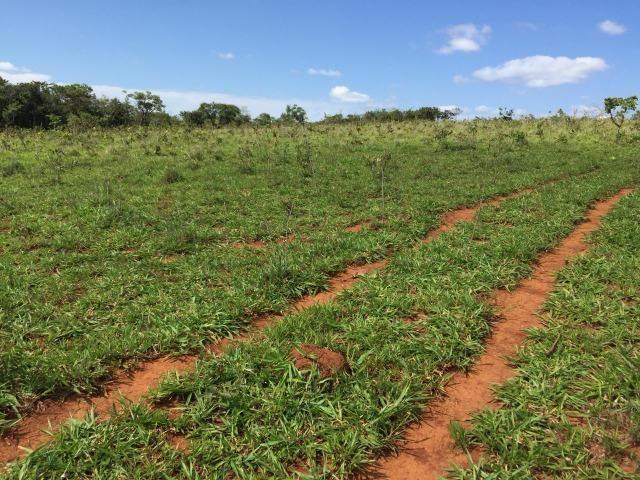 Fazenda em bambui 440 hectares 3.000.000.00