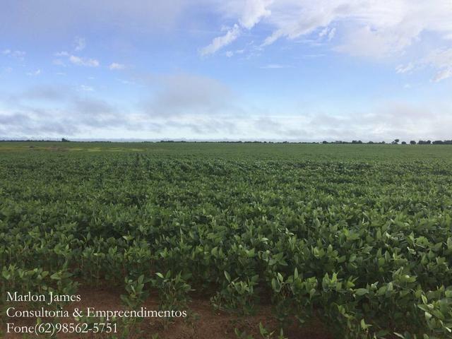 Fazenda em Mundo Novo! - Foto 5