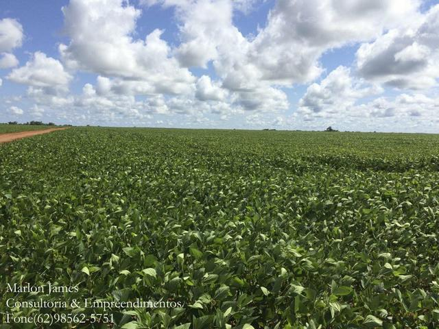 Fazenda em Mundo Novo! - Foto 10