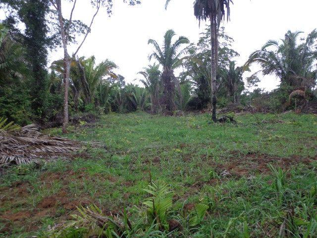 Fazenda 100hectares - Foto 17