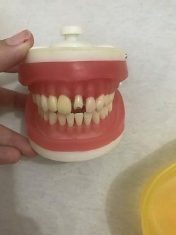 Manequim de dentistica pronew