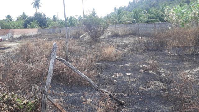 Vendo e troco terreno em lagoa do pau Coruripe - Foto 2