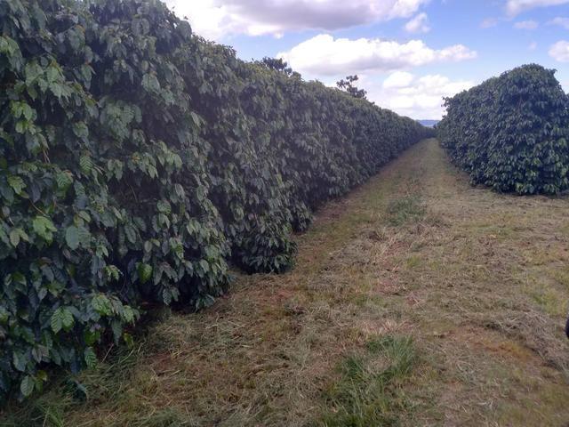 Fazenda com 83ha bem localizada, em Patrocínio!! - Foto 3