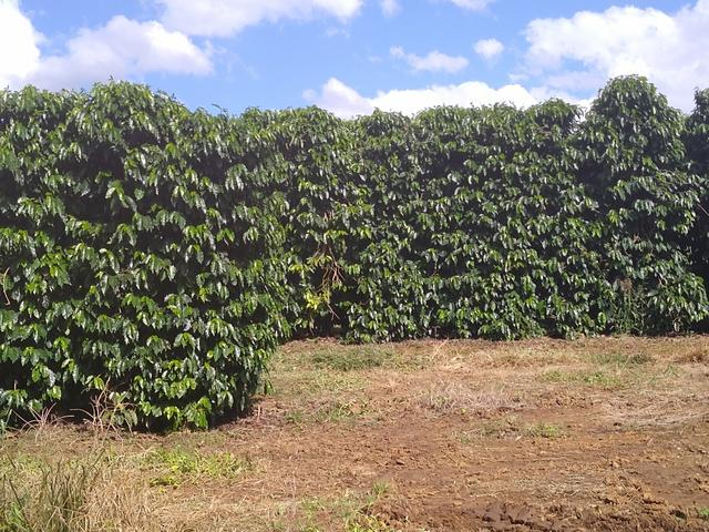 Fazenda com 83ha bem localizada, em Patrocínio!! - Foto 7