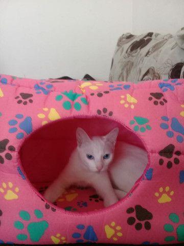 Casinha toca para gatinhos ou cachorros