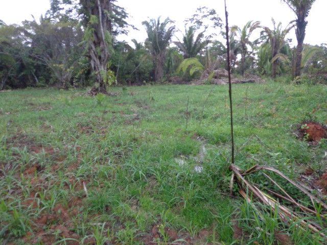 Fazenda 100hectares - Foto 6