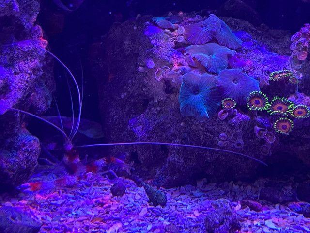Aquario marinho completo  - Foto 4