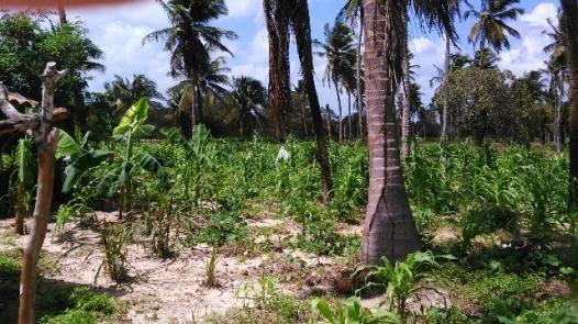 Fazenda em Itarema 386 hectares plantados de cajueiros,lagoa,poço,rio na extrema - Foto 2