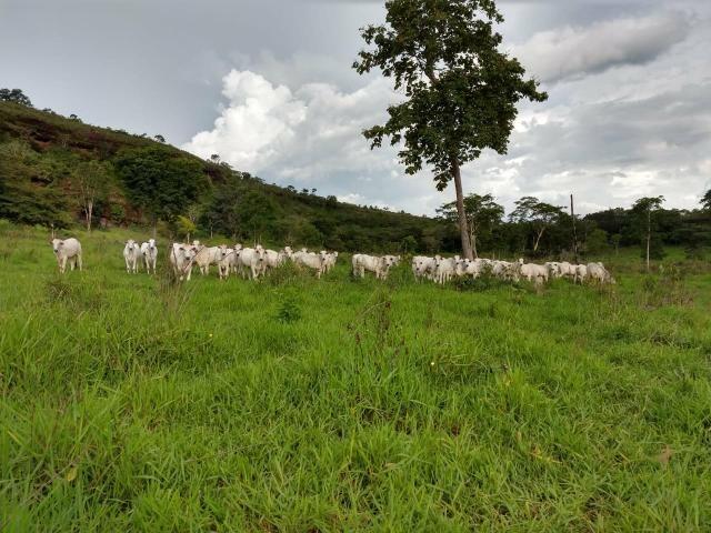 Fazenda em Guiratinga 680Hectares - Foto 19