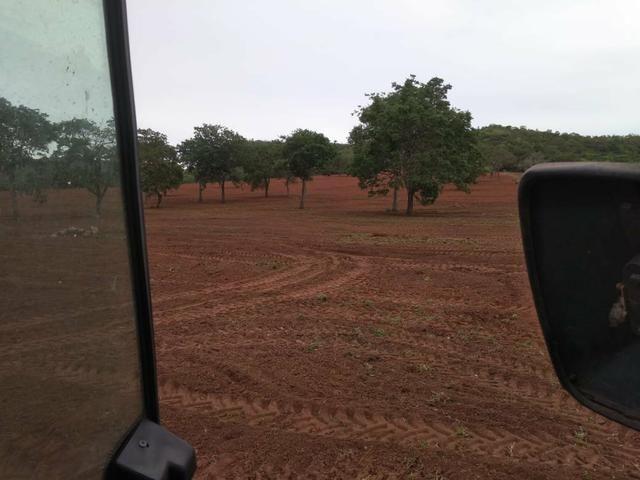 Fazenda em Guiratinga 680Hectares - Foto 7