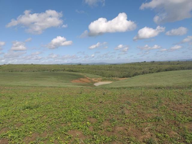 Propriedade de 8 hectares-toda cercada-com 2 casas, a 5 km de Apoti-PE - Foto 7