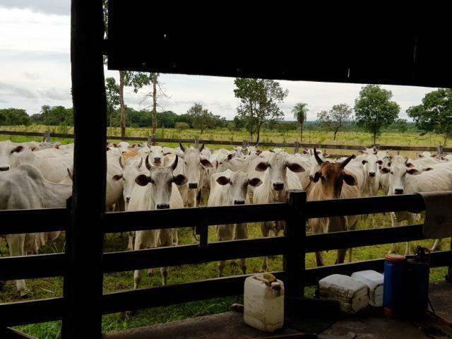Fazenda c/ 357 alqueires em Porto Esperidião