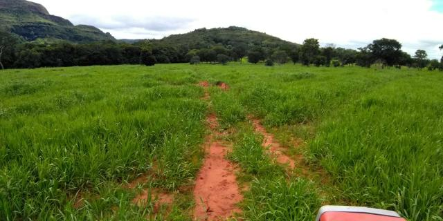 Fazenda em Guiratinga 680Hectares - Foto 10