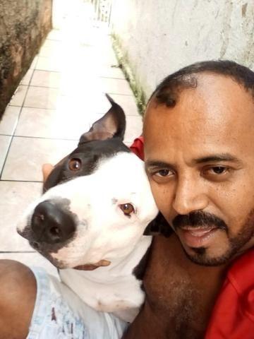 Pitbull apbt com red nose - Foto 4