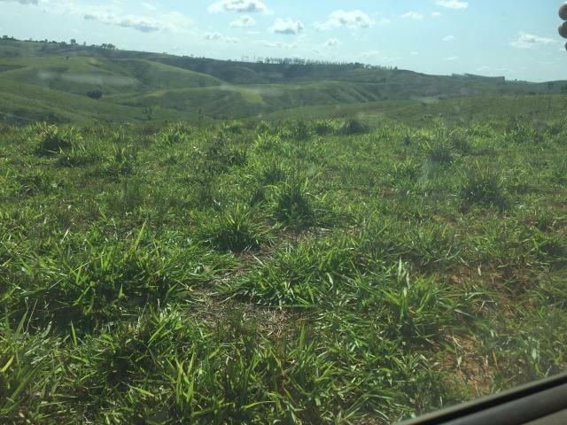Fazenda em bambui 440 hectares 3.000.000.00 - Foto 4