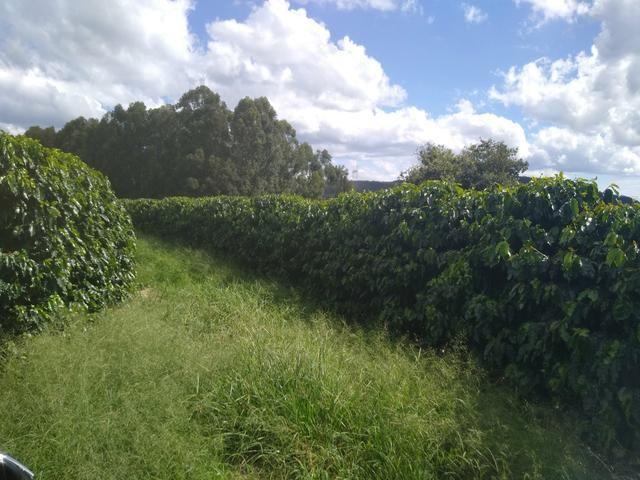 Fazenda com 83ha bem localizada, em Patrocínio!! - Foto 15