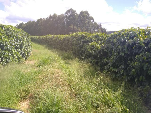Fazenda com 83ha bem localizada, em Patrocínio!! - Foto 13