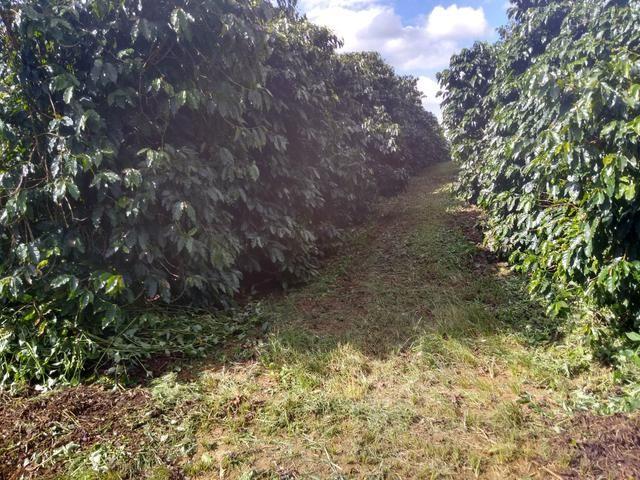 Fazenda com 83ha bem localizada, em Patrocínio!! - Foto 10