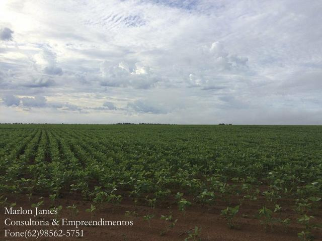 Fazenda em Mundo Novo! - Foto 3