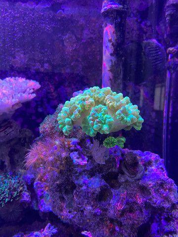 Aquario marinho completo  - Foto 2