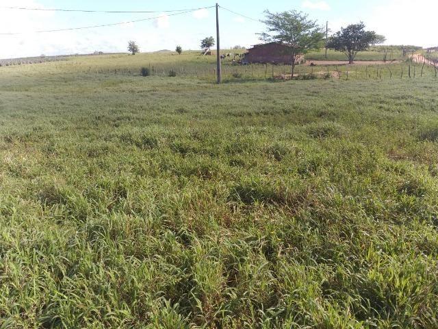 Propriedade de 8 hectares-toda cercada-com 2 casas, a 5 km de Apoti-PE - Foto 15