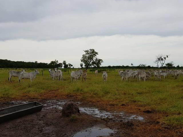 Fazenda c/ 357 alqueires em Porto Esperidião - Foto 19