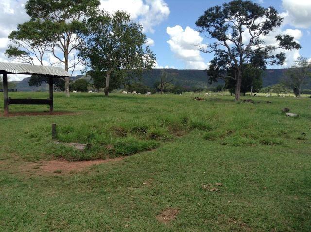 Fazenda 612 hectares em Pedra Preta - Foto 4