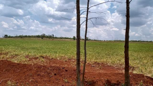 Fazenda  Arrendamento no Ms 900 ha - Foto 4