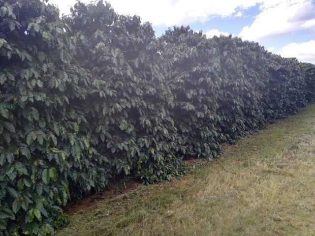 Fazenda com 83ha bem localizada, em Patrocínio!! - Foto 18