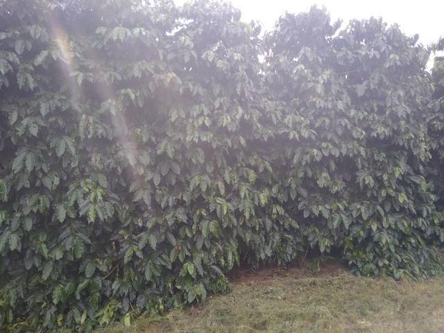Fazenda com 83ha bem localizada, em Patrocínio!! - Foto 17