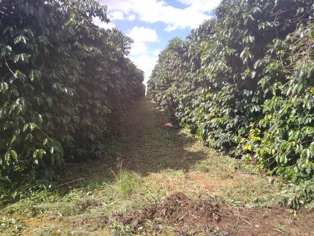 Fazenda com 83ha bem localizada, em Patrocínio!! - Foto 11