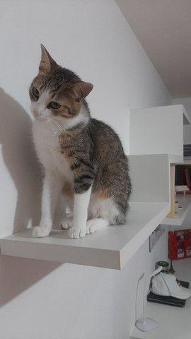 Doaçao casal de gatos - Foto 2