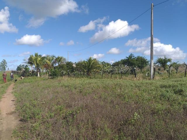 Propriedade de 8 hectares-toda cercada-com 2 casas, a 5 km de Apoti-PE - Foto 3
