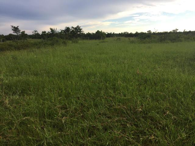 Fazenda 4.983 hectares em Livramento 35 km de Cuiabá - Foto 4