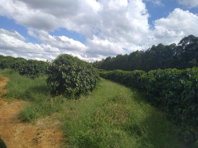 Fazenda com 83ha bem localizada, em Patrocínio!! - Foto 12